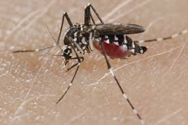 best-tips-to-protect-yourself-from-dengue-in-any-season